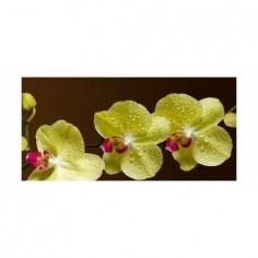 Panou bucatarie, protectie plita, aragaz, antistropire, print UV model Orhidee 32 125x50 cm Decoglass