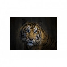 Panou decorativ bucatarie, sticla securizata, protectie plita, print UV, Tigru 100x50 cm Decoglass