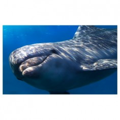Panou bucatarie, protectie plita, aragaz, antistropire, print UV model Balena 100x50 cm Decoglass