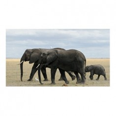 Panou bucatarie, protectie plita, aragaz, antistropire, print UV model Elefanti 2 125x50 cm Decoglass