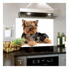 Panou bucatarie, protectie plita, aragaz, antistropire, print UV model Catel Terrier 90x60 cm Decoglass