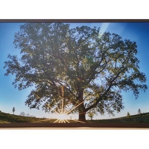 Panou radiant infrarosu DRAGUS, imprimat imagine Copac Verde 90/60cm 600W/500W 7kg 15-28mc - egato.ro