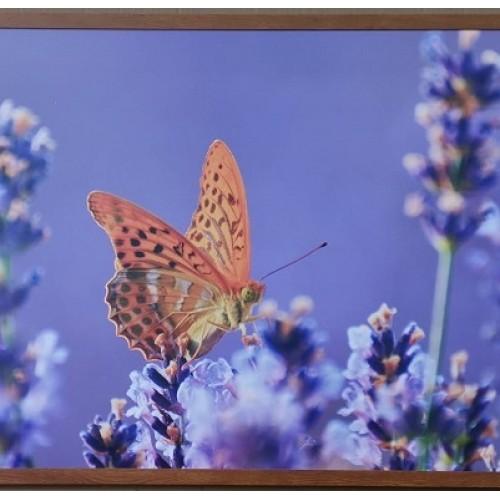 Panou radiant infrarosu DRAGUS, imprimat imagine Fluture 50/60cm 300W/250W 5kg 5-15mc - egato.ro